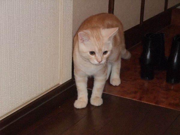 2008_1224圭太2008年12月3日0017.JPG