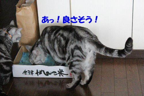 2012年6月アップ4.JPG